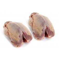 Partridge (brace)